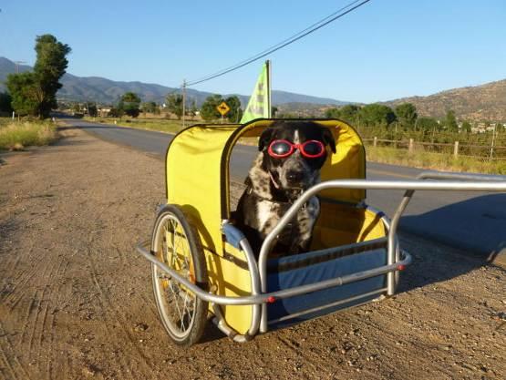 Scott's Dog in trailer