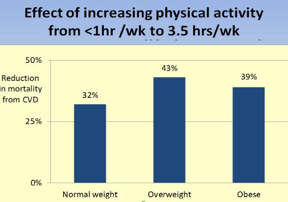 William Cortvriendt activity chart