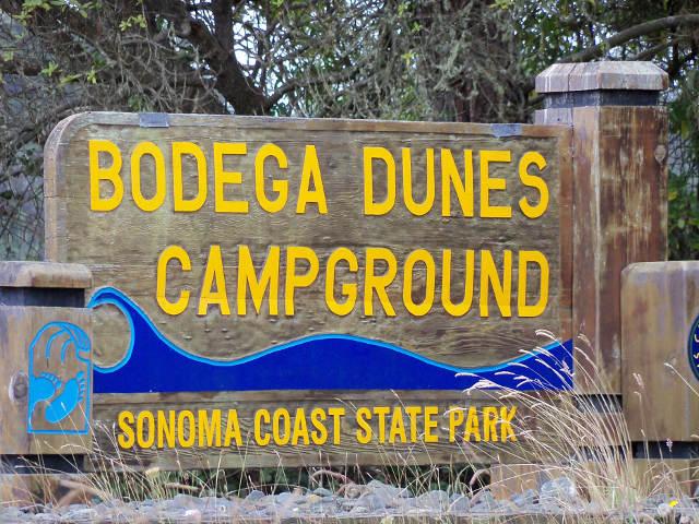 Bodega Dunes CG NEMO Obi 1